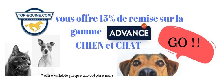 advance_chien_chat