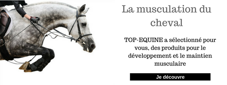 musculation cheval