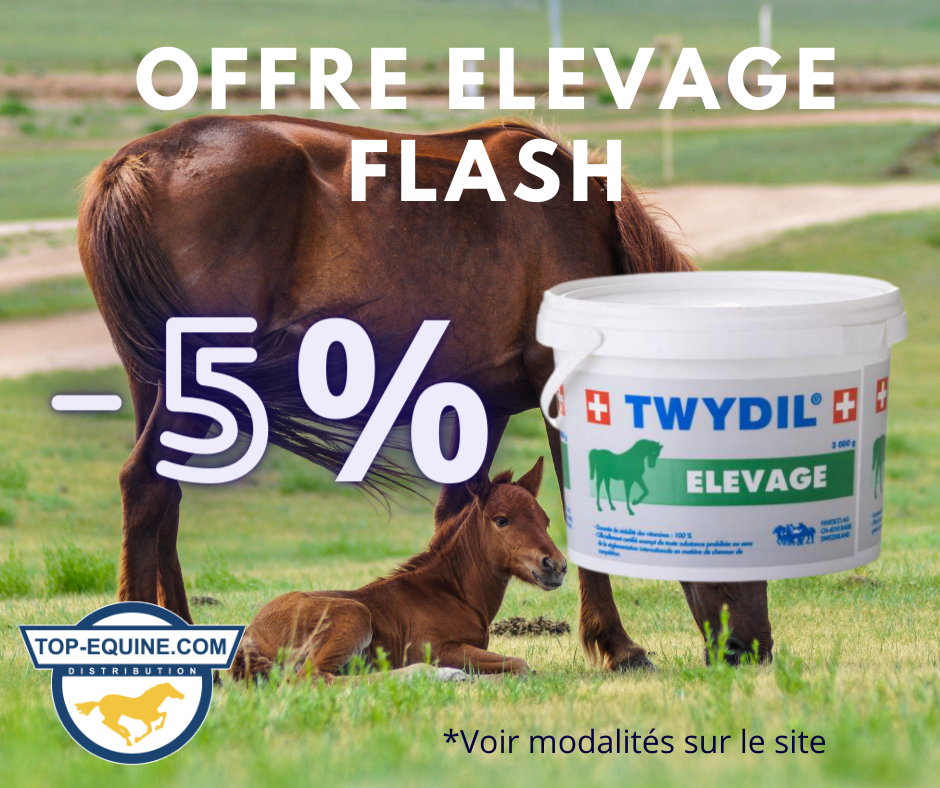 offre_elevage_twydil_poulains